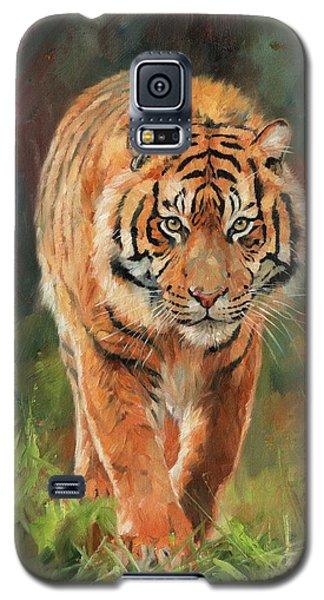 Amur Tiger Galaxy S5 Case by David Stribbling
