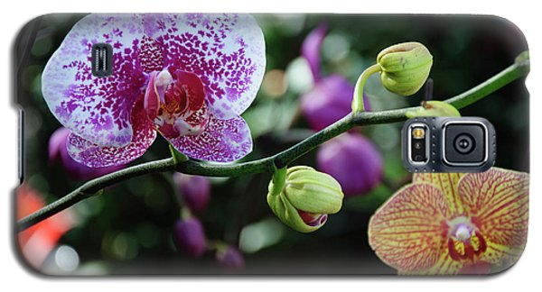 Butterfly Orchid Flowers Galaxy S5 Case