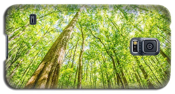 cypress forest and swamp of Congaree National Park in South Caro Galaxy S5 Case