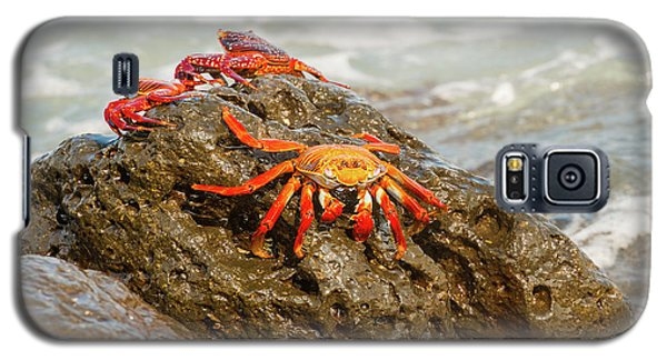 Galaxy S5 Case featuring the photograph Sally Lightfoot Crab On Galapagos Islands by Marek Poplawski