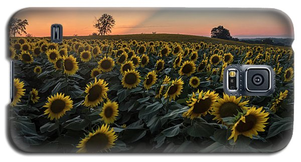 Sunflower Sunset Galaxy S5 Case