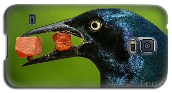 A Balanced Meal For A Grackle Galaxy S5 Case by Jim Moore