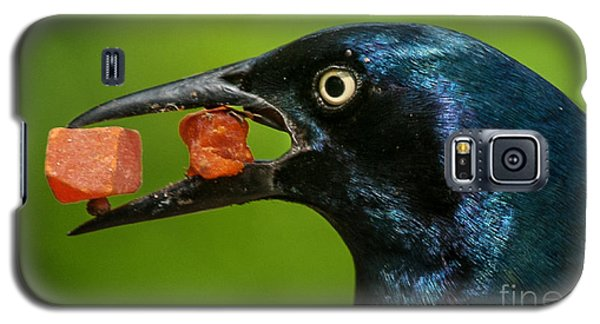 Galaxy S5 Case featuring the photograph A Balanced Meal For A Grackle by Jim Moore