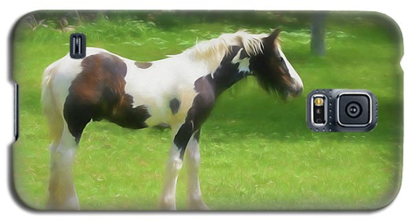 A Beautiful Young Gypsy Vanner Standing In The Pasture Galaxy S5 Case