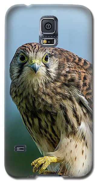 A Beautiful Young Kestrel Looking Behind You Galaxy S5 Case