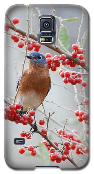 A Berry Good Morning Galaxy S5 Case by Amy Porter