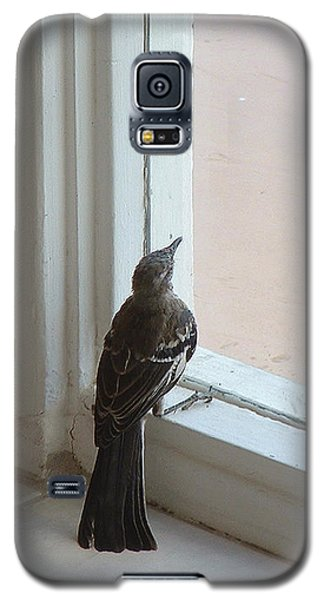 A Bird At A Plate Glass Window Galaxy S5 Case by Stan  Magnan