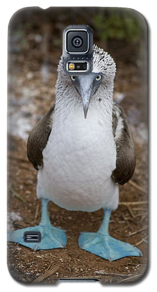 A Blue Footed Booby Looks At The Camera Galaxy S5 Case