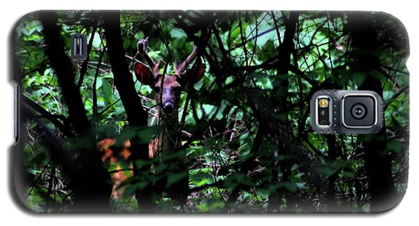 A Buck Peers From The Woods Galaxy S5 Case