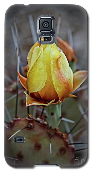 Galaxy S5 Case featuring the photograph A Bud In The Thorns by Robert Bales
