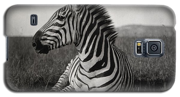 A Burchells Zebra At Rest Galaxy S5 Case