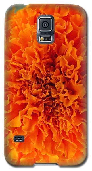 A Burst Of Orange Galaxy S5 Case