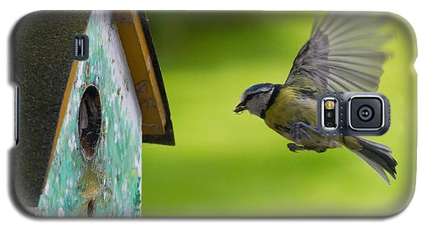 A Busy Blue Tit Mum Galaxy S5 Case