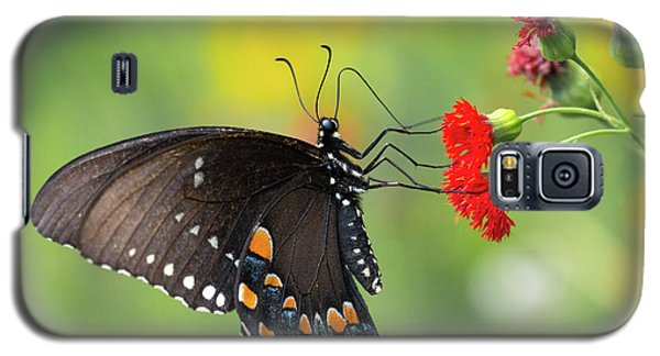 A Butterfly  Galaxy S5 Case