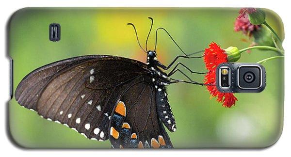 A Butterfly  Galaxy S5 Case
