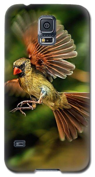 A Cardinal Approaches Galaxy S5 Case