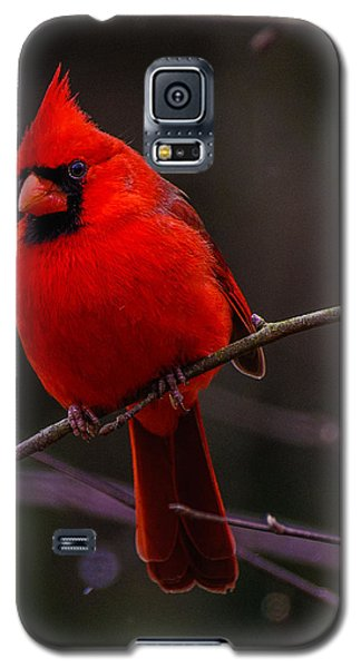 Galaxy S5 Case featuring the photograph A Cardinal In January  by John Harding
