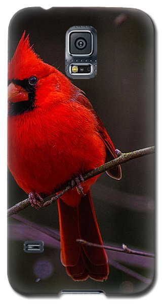 A Cardinal In January  Galaxy S5 Case by John Harding