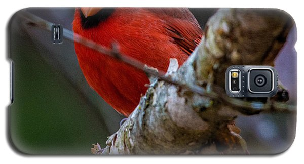 A Cardinal In Spring   Galaxy S5 Case