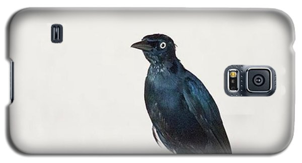 A Carib Grackle (quiscalus Lugubris) On Galaxy S5 Case by John Edwards