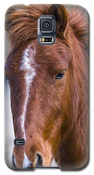 A Chestnut Horse Portrait Galaxy S5 Case