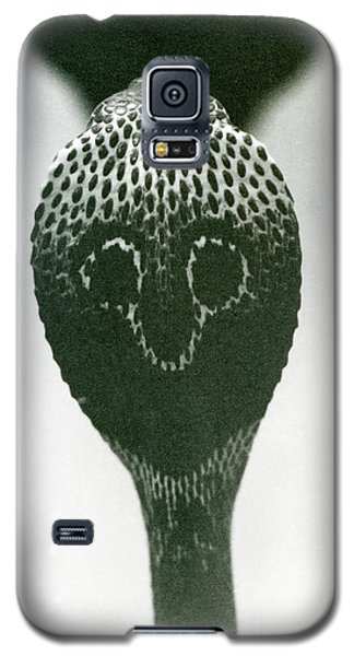 A Cobra With Raised Head And Flared Hood  Galaxy S5 Case