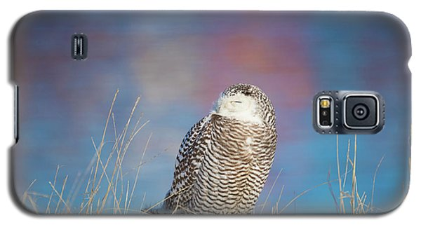 A Colorful Snowy Owl Galaxy S5 Case