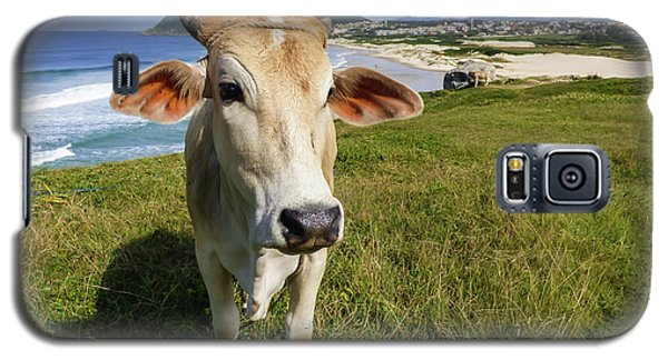 A Cow At The Beach Galaxy S5 Case