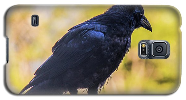 Galaxy S5 Case featuring the photograph A Crow Looks Away by Jonny D