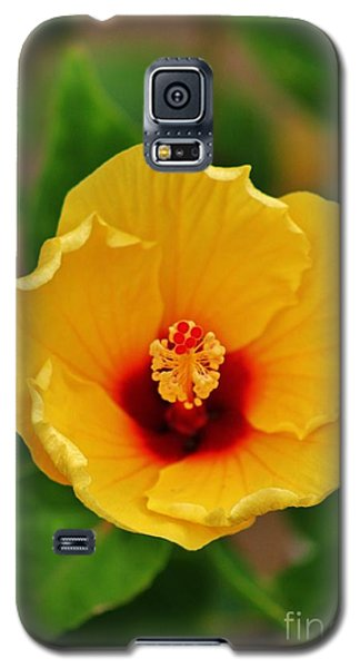 A Cup Of Hibiscus In The Morning Galaxy S5 Case
