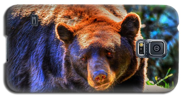 A Curious Black Bear Galaxy S5 Case