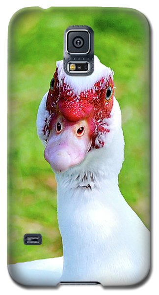 A Curious Muscovy Duck  Galaxy S5 Case