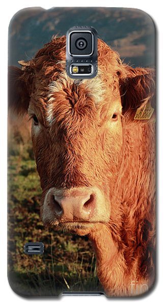 A Curious Red Cow Galaxy S5 Case