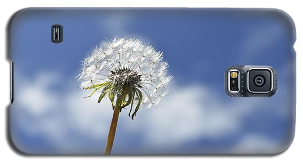 A Dandelion Flower Galaxy S5 Case by Alex King
