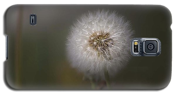 Galaxy S5 Case featuring the photograph A Dandelion by Lora Lee Chapman