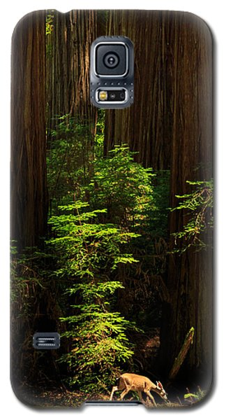 A Deer In The Redwoods Galaxy S5 Case by James Eddy