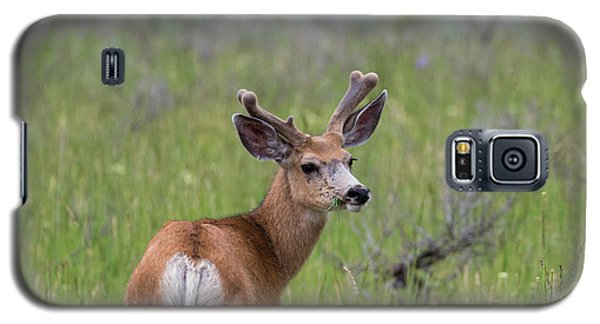 A Deer In Yellowstone National Park  Galaxy S5 Case