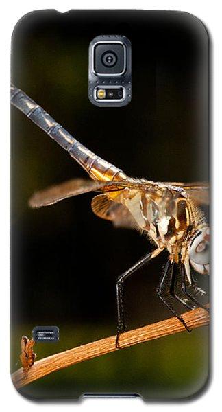 A Dragonfly Galaxy S5 Case