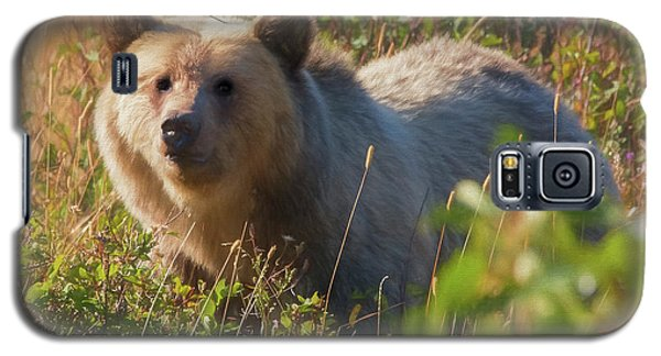 A  Female Grizzly Bear Looking Alertly At The Camera. Galaxy S5 Case