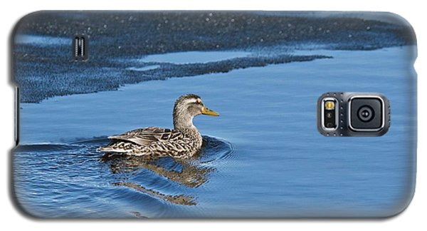 Galaxy S5 Case featuring the photograph A Female Mallard In Thunder Bay by Michael Peychich