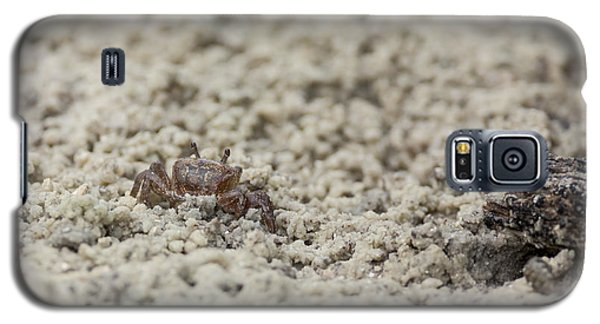 A Fiddler Crab In The Sand Galaxy S5 Case