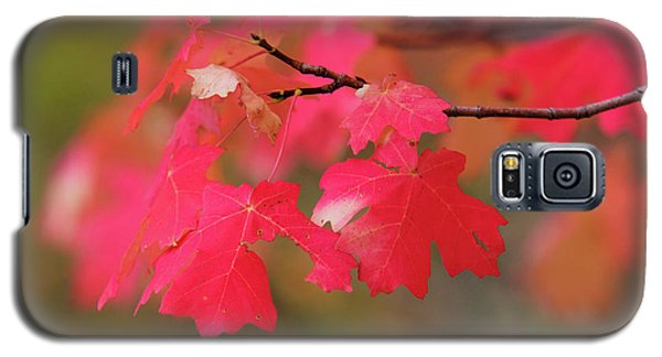 A Flash Of Autumn Galaxy S5 Case