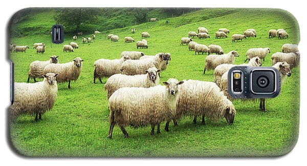 A Flock Of Sheep Galaxy S5 Case
