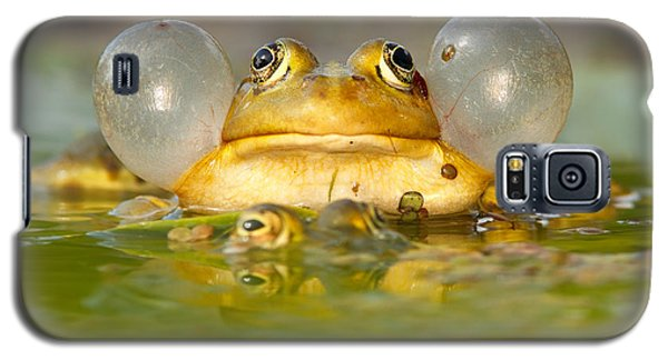 A Frog's Life Galaxy S5 Case by Roeselien Raimond