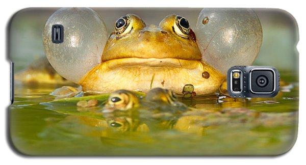 A Frog's Life Galaxy S5 Case