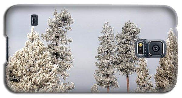 A Frosty Morning 2 Galaxy S5 Case by Janie Johnson