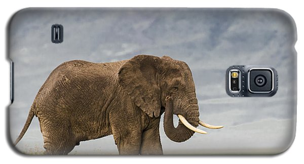 Galaxy S5 Case featuring the photograph A Gentle Giant by Sandra Bronstein