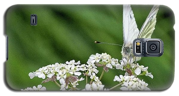 A Green-veined White (pieris Napi) Galaxy S5 Case by John Edwards
