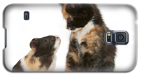 A Guinea For Your Thoughts Galaxy S5 Case