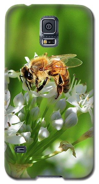 A Honey Bee At Work In An Herb Garden Galaxy S5 Case